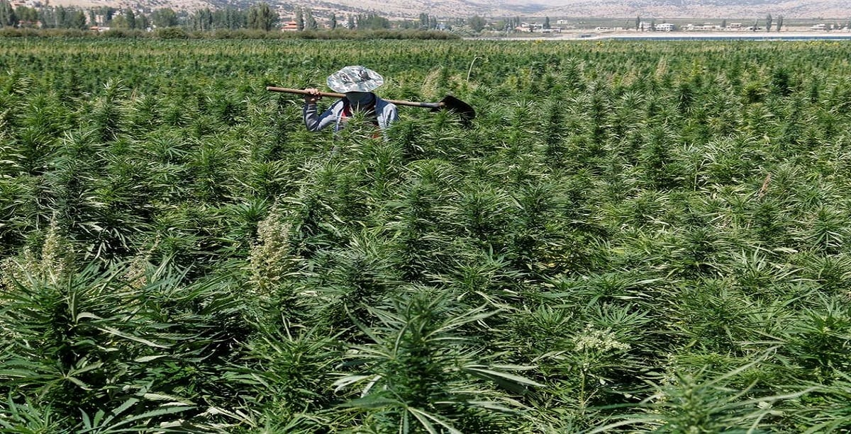https://www.thenational.ae/world/mena/lebanon-becomes-first-arab-country-to-legalise-cannabis-for-medical-use-1.1009334#2