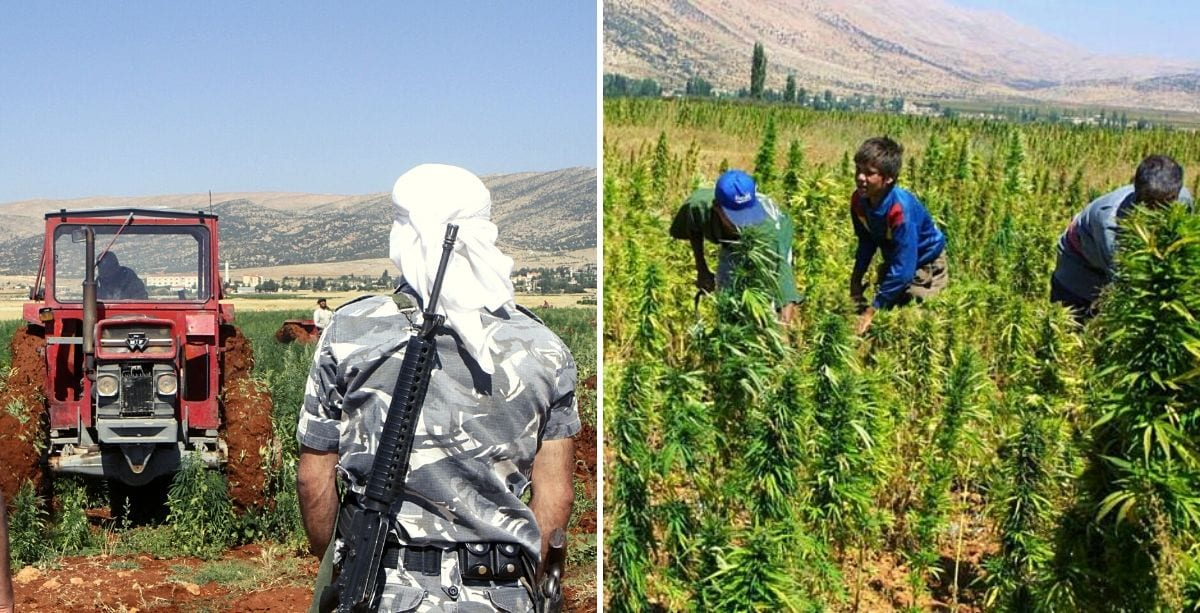 Legal-Cannabis-May-Spell-Trouble-for-Its-Lebanese-Farmers