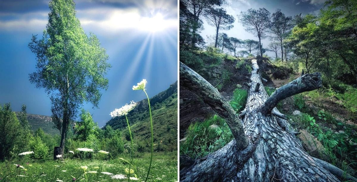 Lebanon Green Pictures That Will Have You Strap Yourself to a Tree