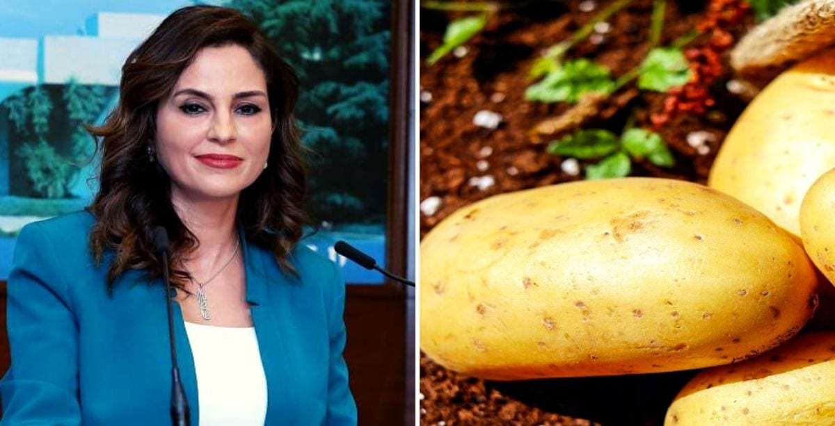 Lebanese To Vote On _Potato Wheat_ Suggestion For Bread Crisis