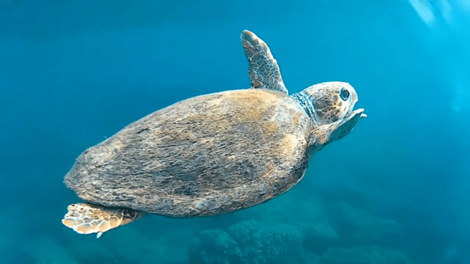 Sea turtle Mother of Anger in Tyre