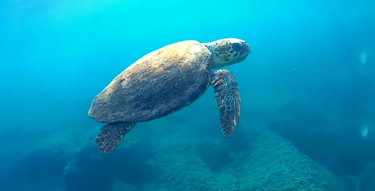 The Mother of Anger_ Sea Turtle Swimming in Tyre
