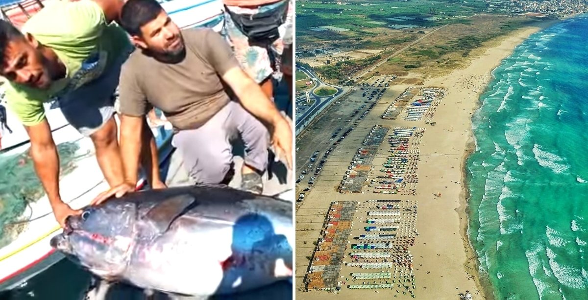 A Giant Tuna Fish Was Caught By A Fisherman in Tyre.
