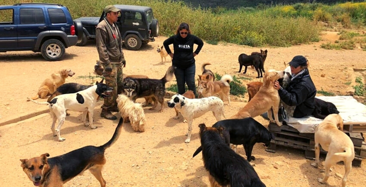 Beirut Charity That Shelters 1,000+ Pets Is Facing Eviction