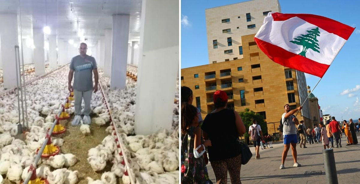 Poultry Syndicate Proposes A Way To Boost Economy And Employment In Lebanon