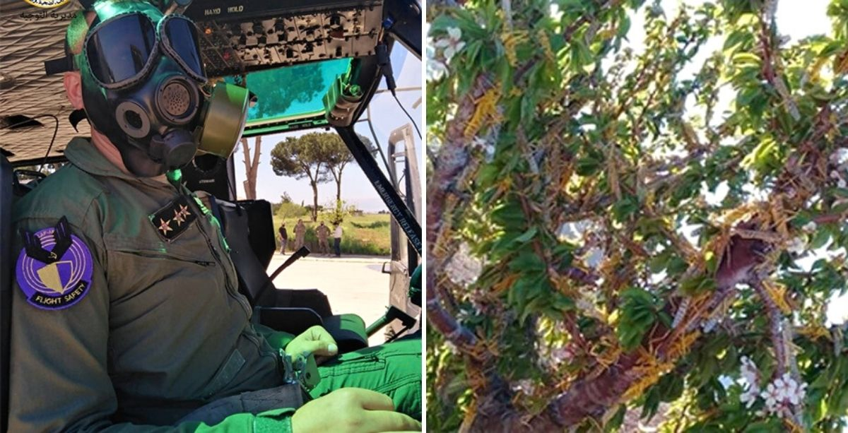 Videos_ Locust Swarms Just Reached Eastern Lebanon