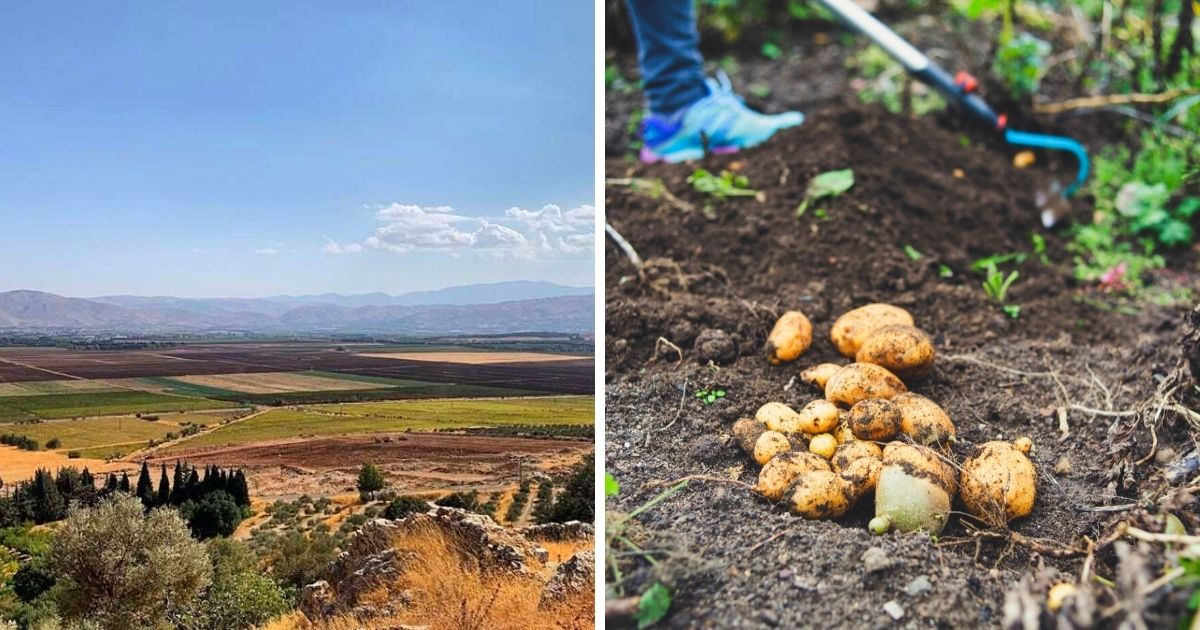 """Farmers In Lebanon Want UNHCR To Stop Alleged """"Refugee Aggressions"""" On Their Land"""
